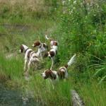 Guinness, Bonny, Aideen und vorne Abby