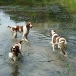 Abby, Aideen, Guinness