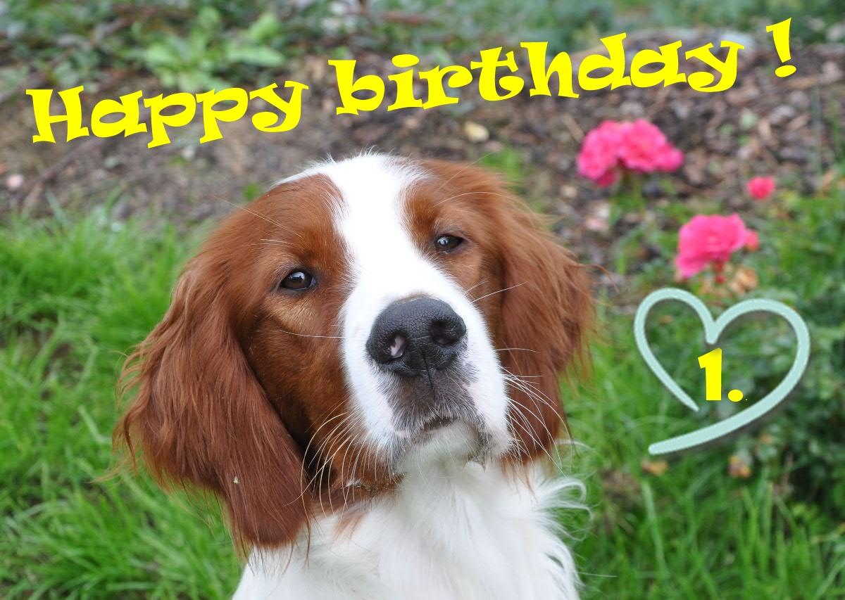Happy 1. birthday!!!