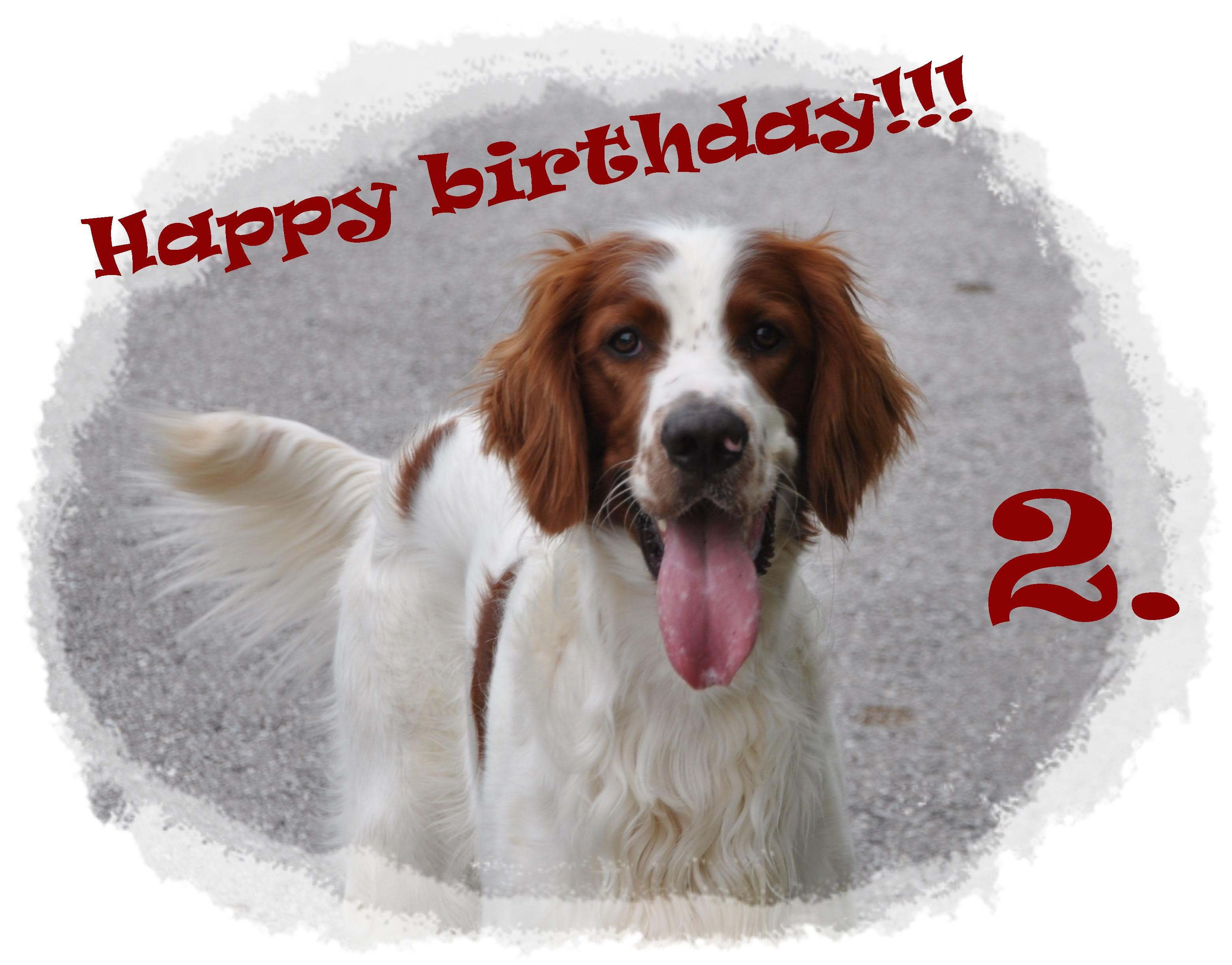 Happy birthday Stanley!!!