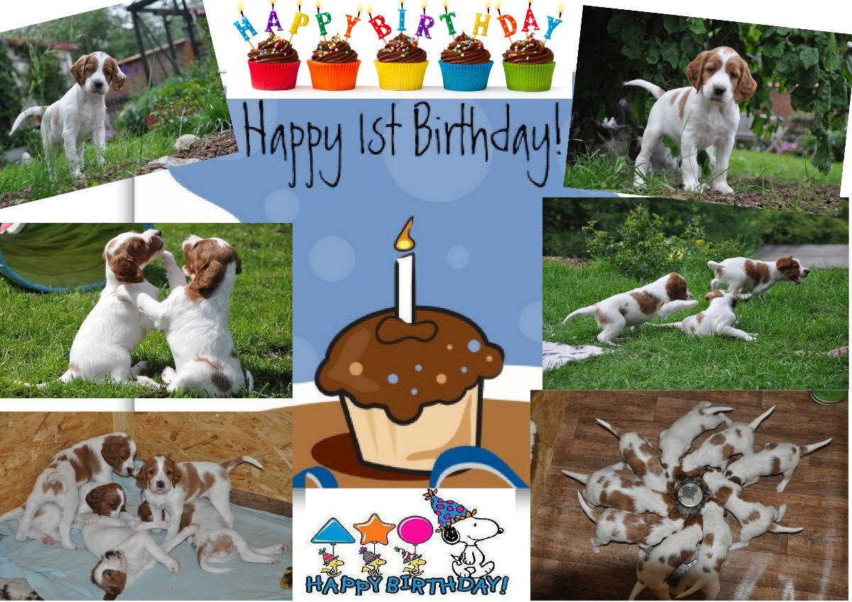Alles Gute zum 1. Geburtstag Candy, Cara, Cheena, Chelsea, Chester, Ciara, Coilean, Cooper und Cuddy!!!