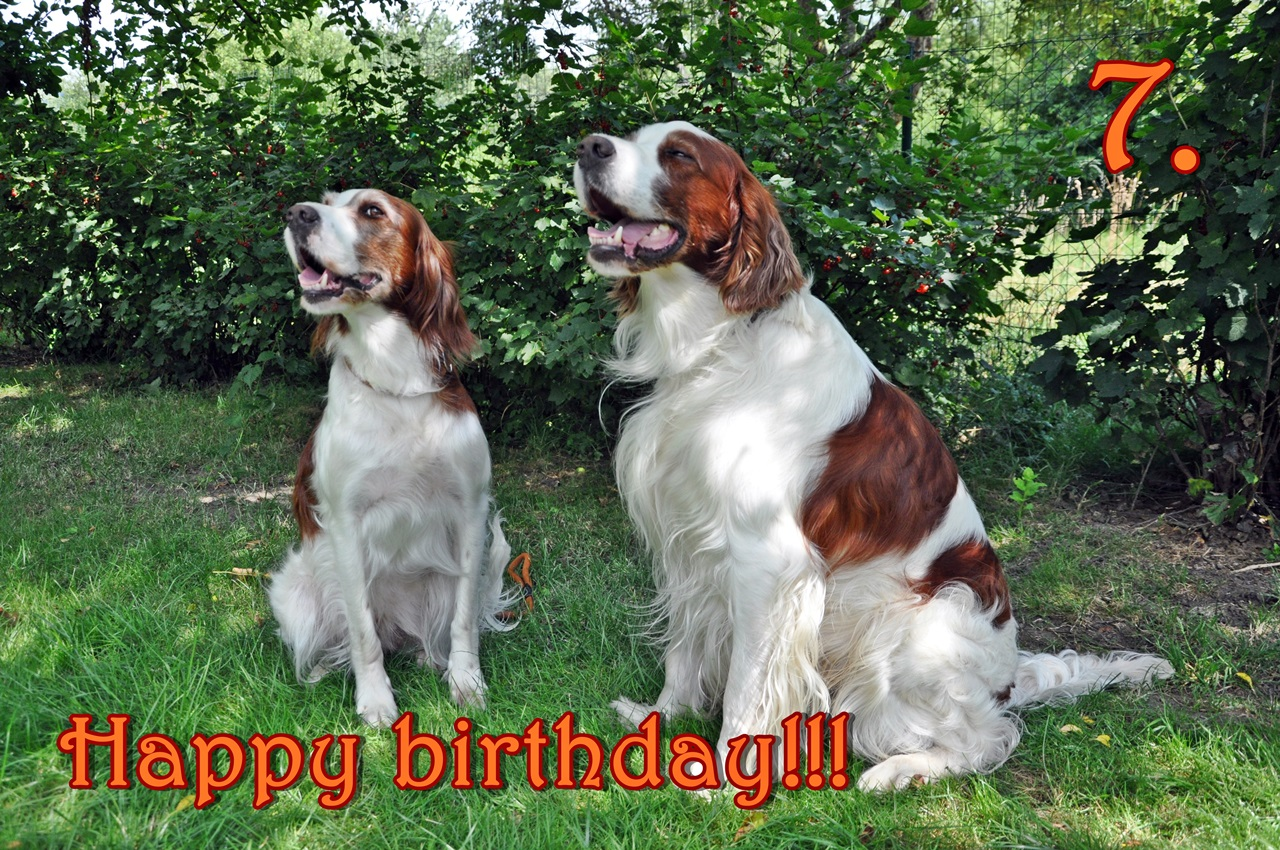 Happy birthday dem A-Wurf zum 7. Geburtstag!!!
