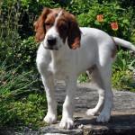 Darcy wird in Russland auf die Jagd gehen