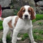 Digby ist über den Atlantik in die USA ausgewandert