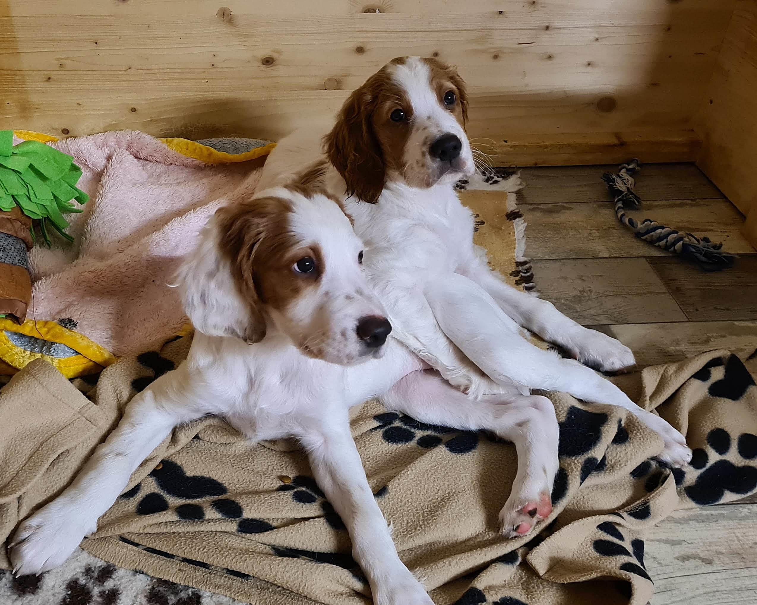 8,5 Wochen alt – Fryda und Finley allein zu Haus