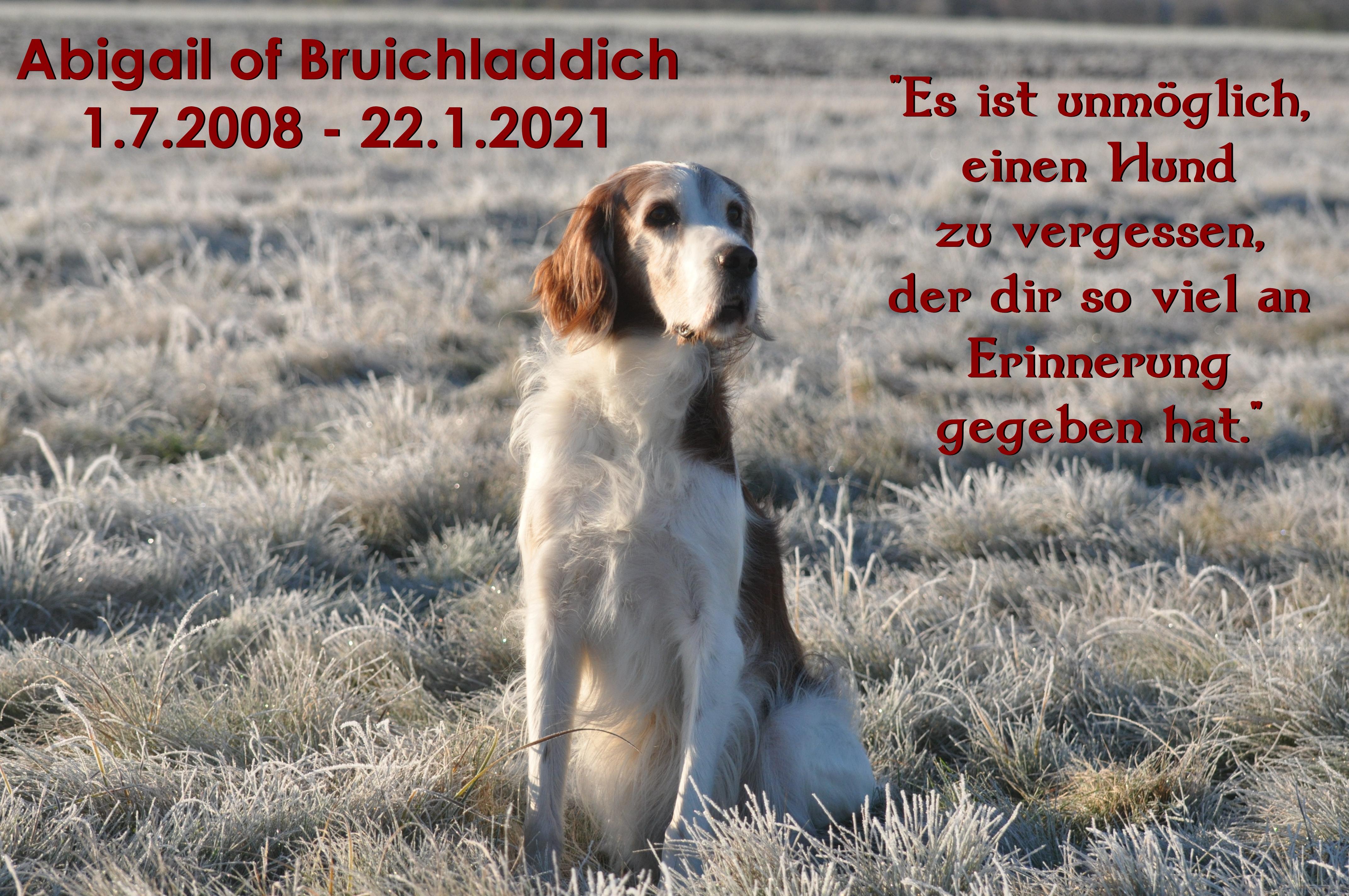 """Abigail of Bruichladdich – genannt """"Abby"""""""